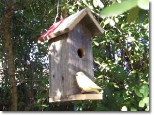 Bird House - The Tall Texan