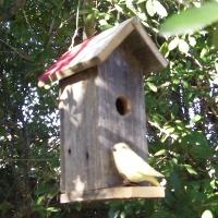 The Tall Texan Birdhouse