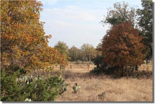 Split Tree Ranchito