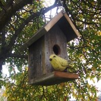 Classic Bird House